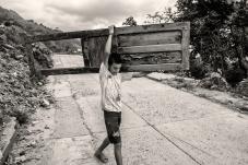 Niño de la palestina consiguiendo madera para cultivo