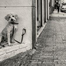 Mascota esperando en la Calle 12 Candelaria , 2014