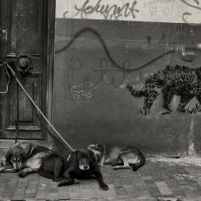 Perros amarrados, calle de la Candelaria, 2014