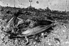 Ave muerta en el interior del Matadero Distrital